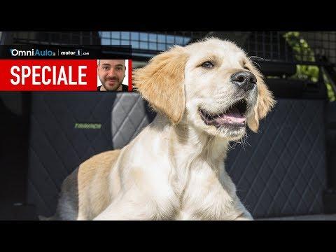 9 cose da sapere per portare un cane in auto