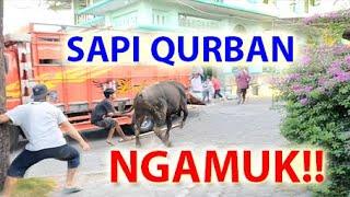 Video Cow Sacrifice Raged!! Angry!! Stress !! Fear the Motor. during the Eid al-Adha prayer offering 2019 MP3, 3GP, MP4, WEBM, AVI, FLV Agustus 2019
