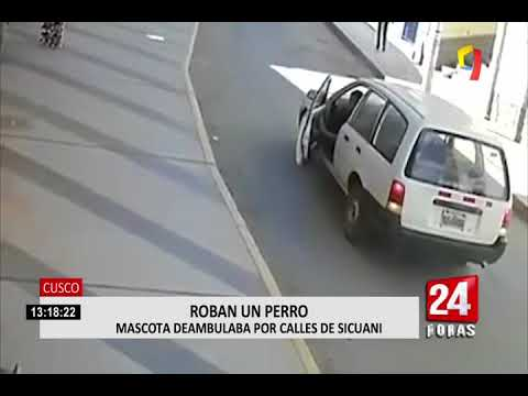 Cusco: cámara capta el momento del presunto robo de un perro