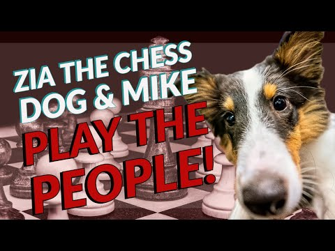 Mike Kummer & Zia the Chess Dog Play The People!