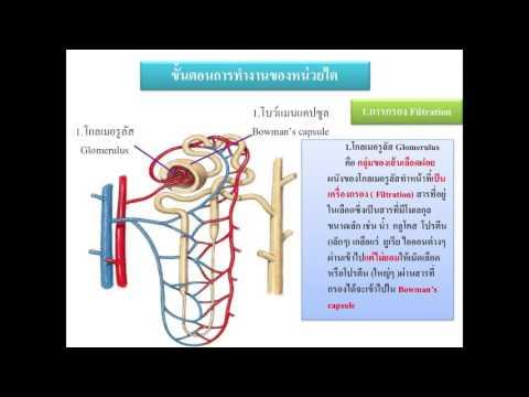 กว่า trihopol Giardia รักษา