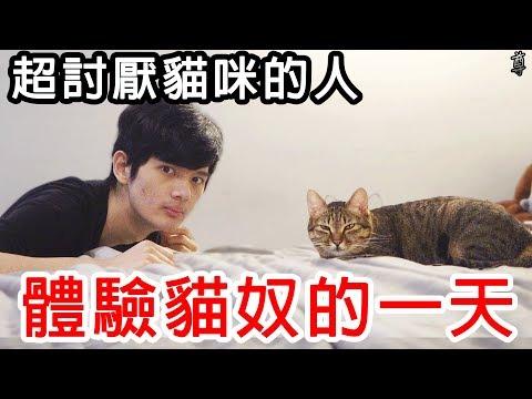試著讓超討厭貓咪的人來體驗養貓的一天!?