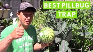 Best Way to Trap Pillbugs & Sowbugs in the Organic Garden