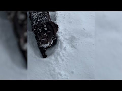 A winter storm dumped record-breaking amounts of snow in Arizona, causing problems for some people, but delighting a black dog who romped in the heavy, white snow.  (Feb. 22)