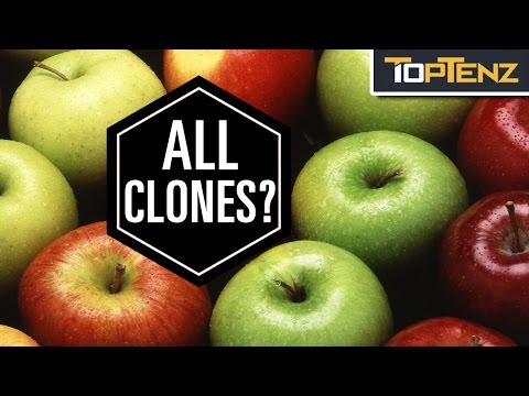 Top 10 DELICIOUS Facts About APPLES