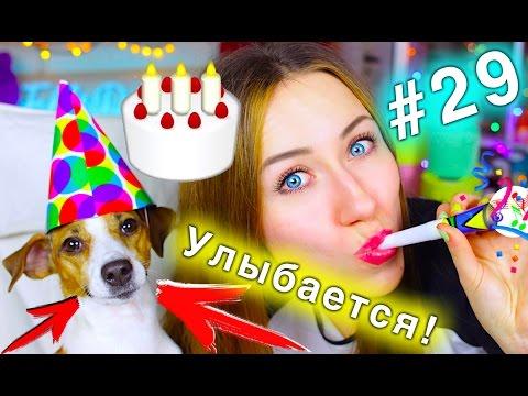День Рождения Собаки! СОБАКА ПРАЗДНУЕТ - КОНКУРС #29 НОВЫЕ ПРИЗЫ ДЛЯ ПОПУГАЕВ | Elli Di Pets