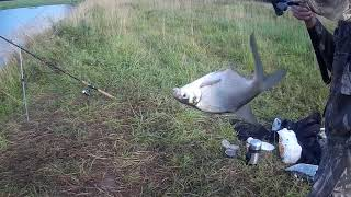 Рыбалка в витебской области на реке дисна