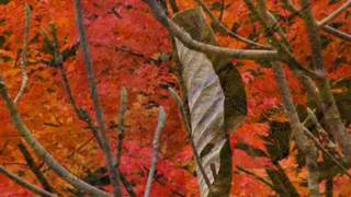 Andy Williams - Autumn Leaves 秋葉