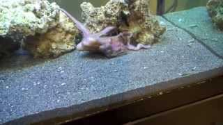 my pet octopus playing/eating