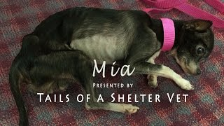 Mia - Vet Suspects Animal Neglect, Officers Investigate Dying Dog - Tails of a Shelter Vet