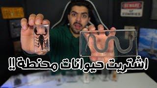 اغرب الاشياء اللي ممكن تشتريها من الانترنت | نسخة الحيوانات المحنطة !!!