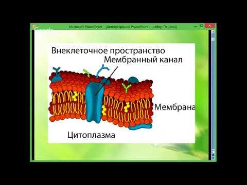 Лечение печени ливолин