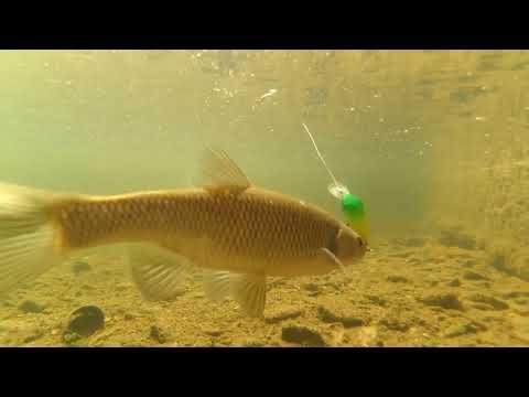 Forum di guanto per pesca invernale