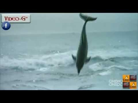 Il delfino bacia il cane e salta di gioia