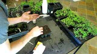 TRG 2012: How To Seed Start Tomatoes and Peppers Indoors Using Seed Trays