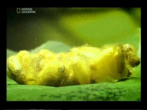Виды паразитов живущих в кишечнике