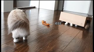 Cat Hiding From Centipede (funny)