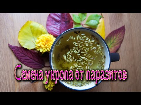 Лекарства от паразитов в организме человека профилактика