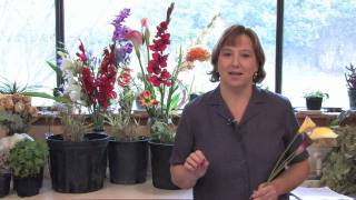 Gardening Lessons : About the Calla Lily