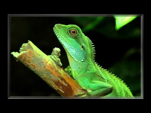 Top 10 Best reptile and amphibian pets!
