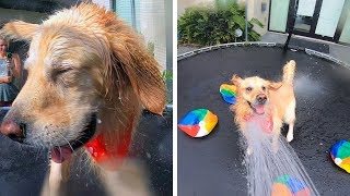 TURNING A TRAMPOLINE INTO A DOG WATERPARK