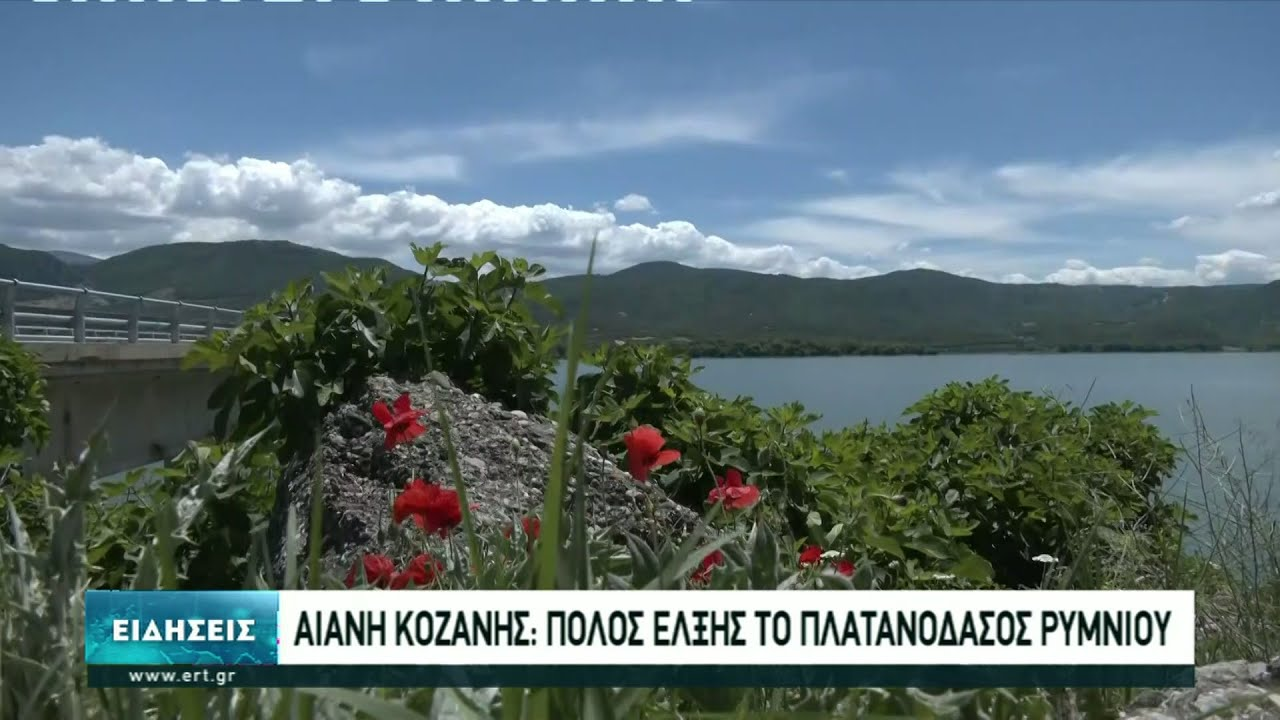 Πόλος έλξης για τους επισκέπτες το πλατανόδασος στην Αιανή Κοζάνης | 14/06/2021 | ΕΡΤ