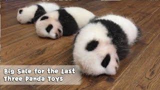 Big sale! 50 percent off for the last three panda toys!   iPanda