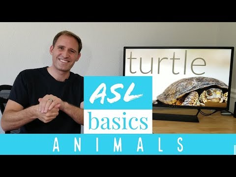 ASL Basics - Learn How to Sign 13 Animals in American Sign Language - ASL