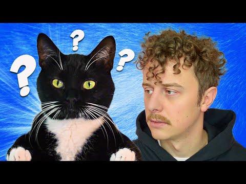 Záhady kočičí mysli