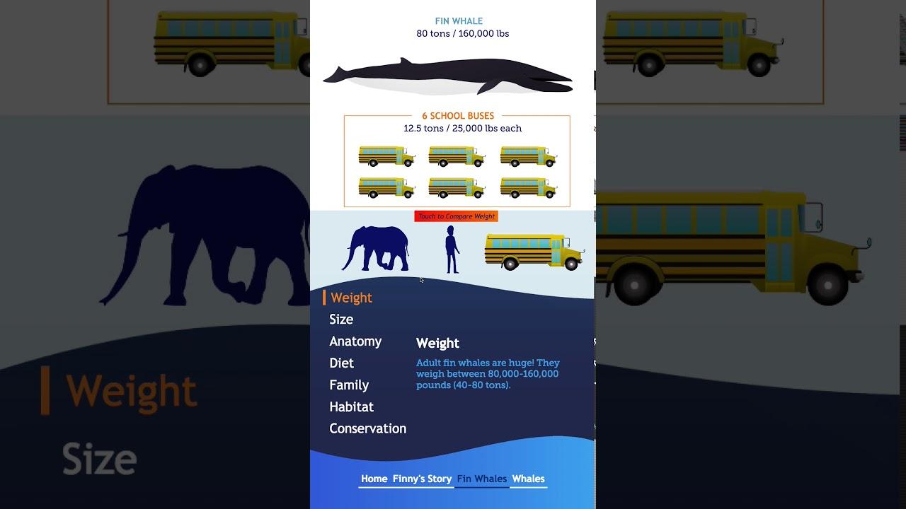 Finny the Whale – GRPM