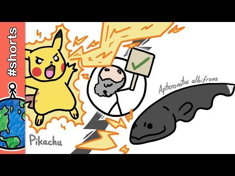 Pikachus existem? #shorts