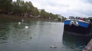 preview picture of video 'SAM 0598 Labedzie w Lagny na przystani'