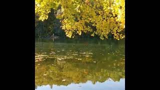 Fall leaves over a pond.