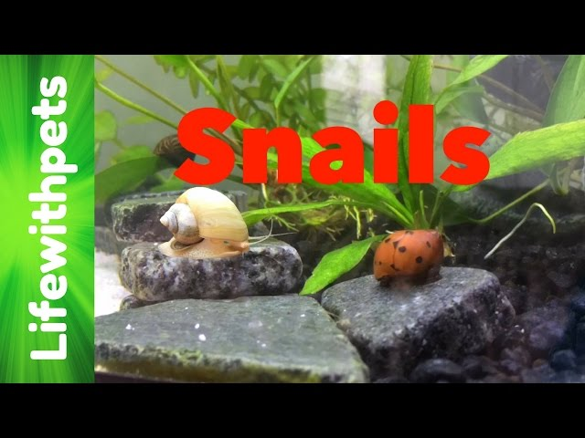 FAQ on Snails Part 1