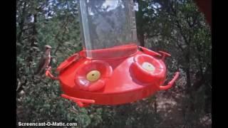 Kolibříci v Texasu
