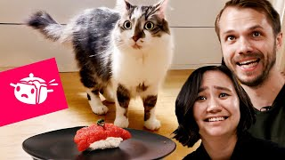 We Tried To Make Sushi For Our Cats • Eating Your Feed • Tasty