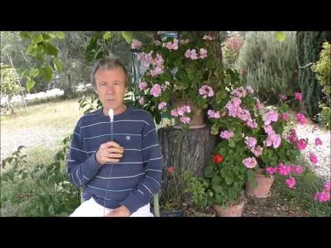 Behandlung von Prostatitis senken Tagil