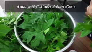 เมนูผัดผักไชยา คะน้าเม็กซิกัน มีคุณค่าทางโภชนาการ มากกว่าผักโขม 2เท่า l Wanchen wanwan