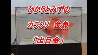 タカラトミーアーツ「ひかりとみずのからくり金魚」