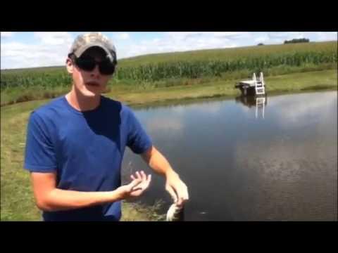 Summer Bass Fishing at a Farm Pond Part 2