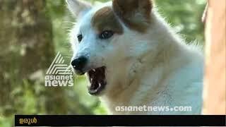 Rocky Dog reacts before Landslide occurs in Idukki