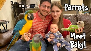 Parrots Meet My Baby for the First Time