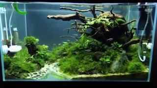 Aranżacja w stylu brazylijskim - kolejne wyzwanie Green Aqua