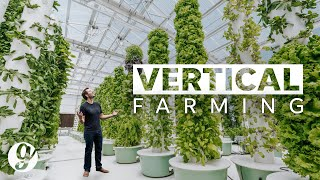Next Gen Farming Without Soil and 90% Less Water | GRATEFUL