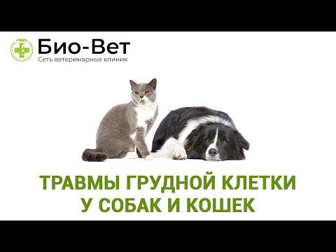 Травмы грудной клетки у собак и кошек.  Ветеринарная клиника Био-Вет.