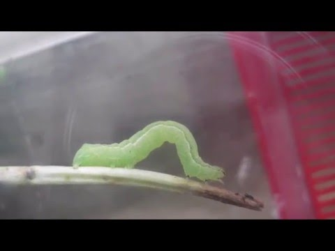 Che fare se i vermi prevengono per dormire