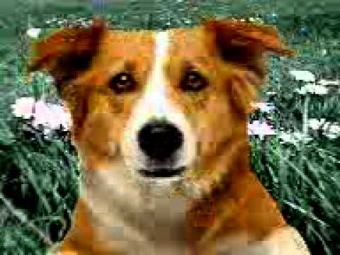 £king^dog.3gp