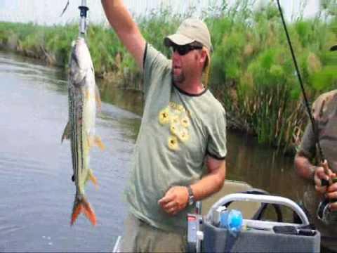 Tigerfish on the Barbel Run