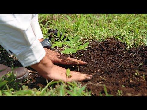 La Tierra de Árboles se merece esta reforestación