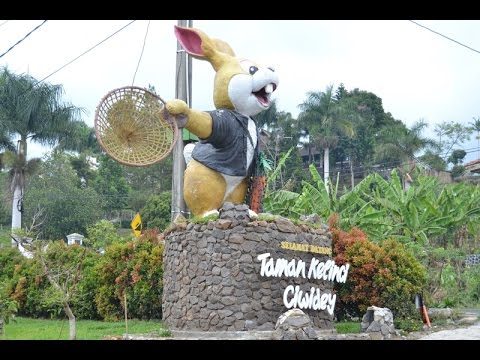 Video Taman Kelinci Ciwidey -Wisata Anak Terpopuler